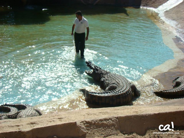 Cocodrilo Park Zoo - 288.jpg
