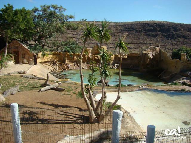 Cocodrilo Park Zoo - 289.jpg