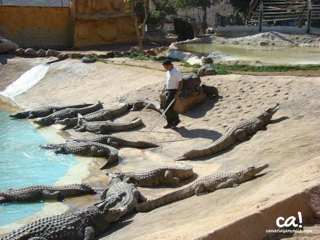 Cocodrilo Park Zoo - 292.jpg
