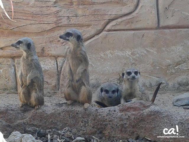 Cocodrilo Park Zoo - 293.jpg