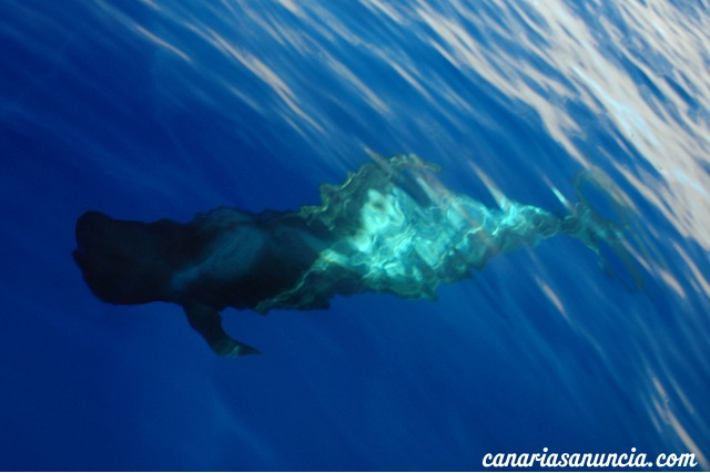Safari de cetáceos, Acuatic Service - 31.jpg