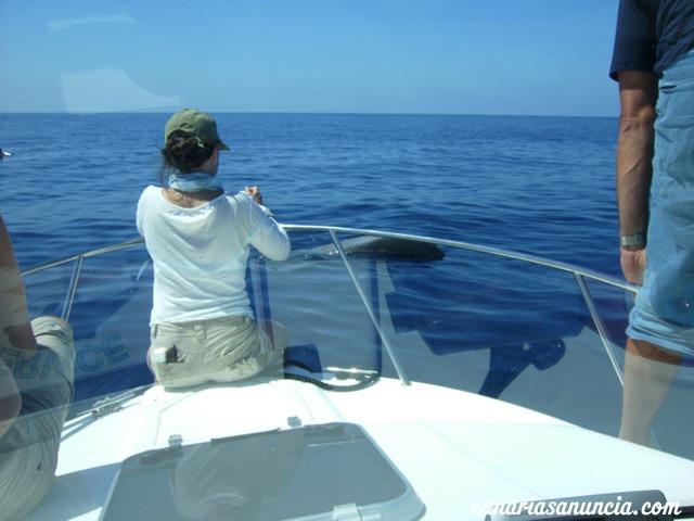 Safari de cetáceos, Acuatic Service - 32.jpg